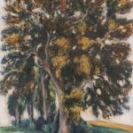 Paysage (arbres)